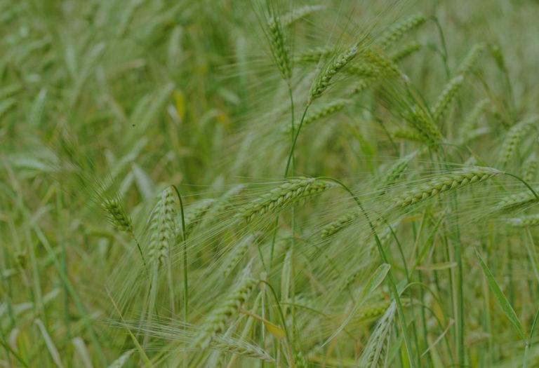 L'irrigation du blé au coeur de la visite de la ferme de Bexianis !